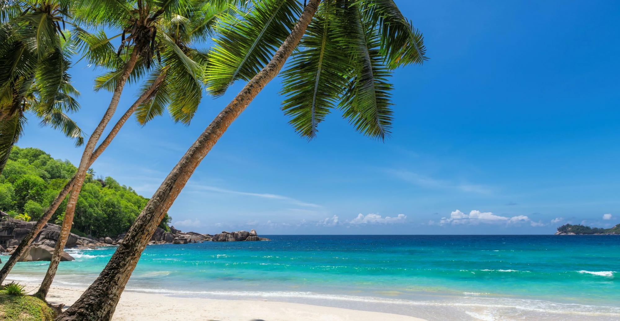 See Me Serene Decorative Beach